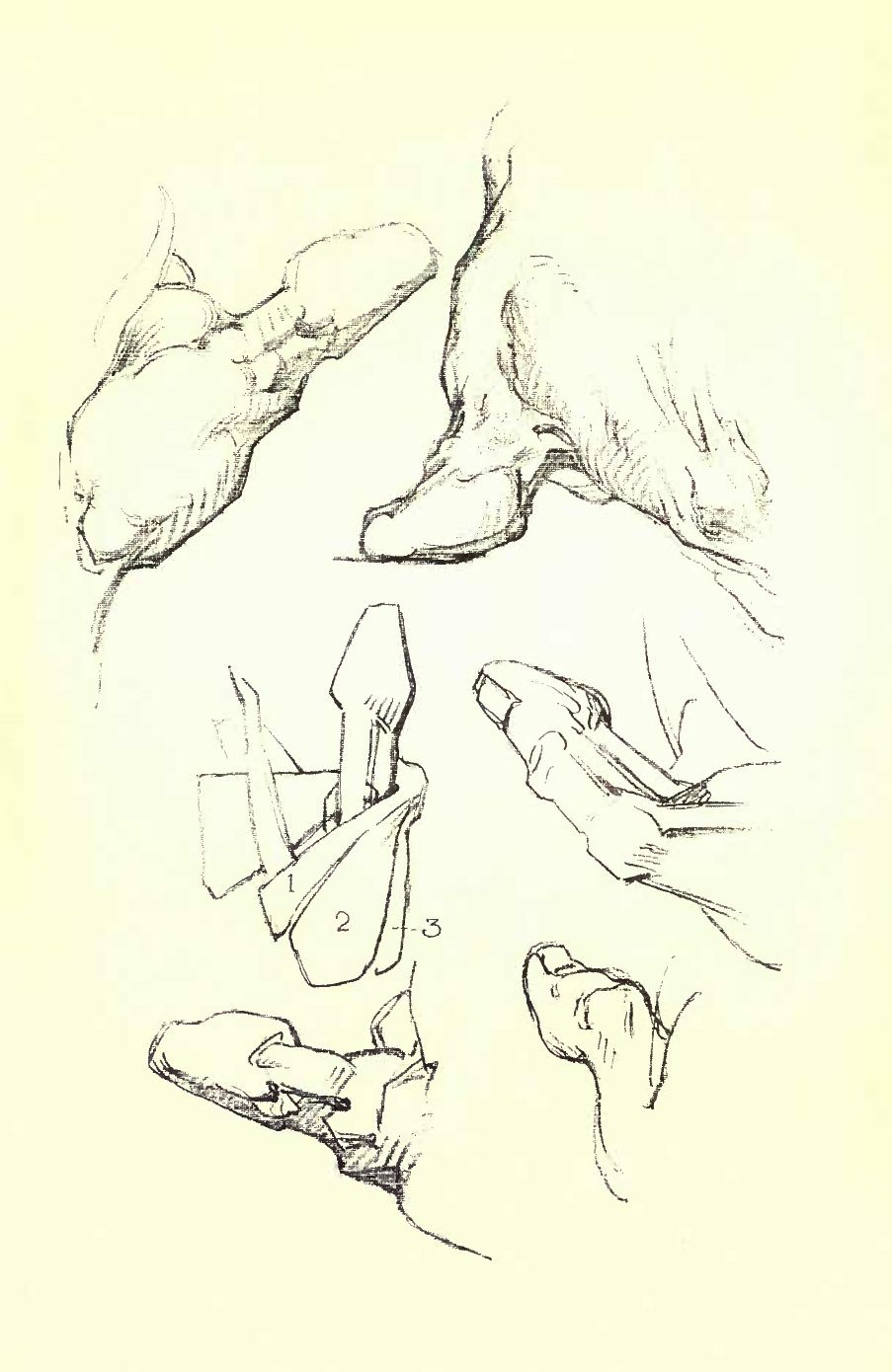 Constructive Anatomy by George Bridgman | Scribd | Anatomy | Pinterest