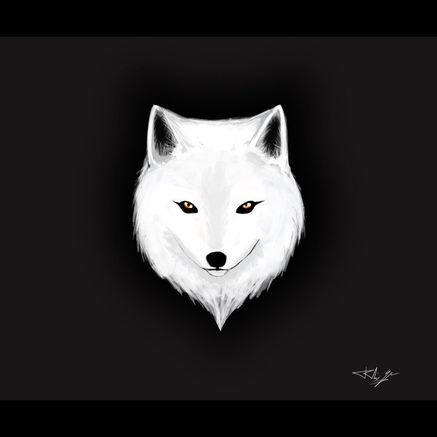 Arctic Fox Arctic Fox Fox Illustration Fox Tattoo