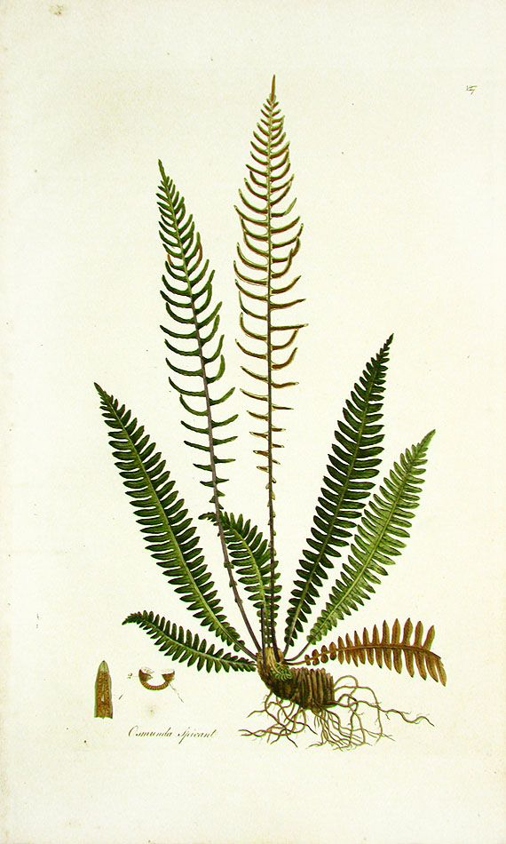 Vintage Botanical Prints 1775