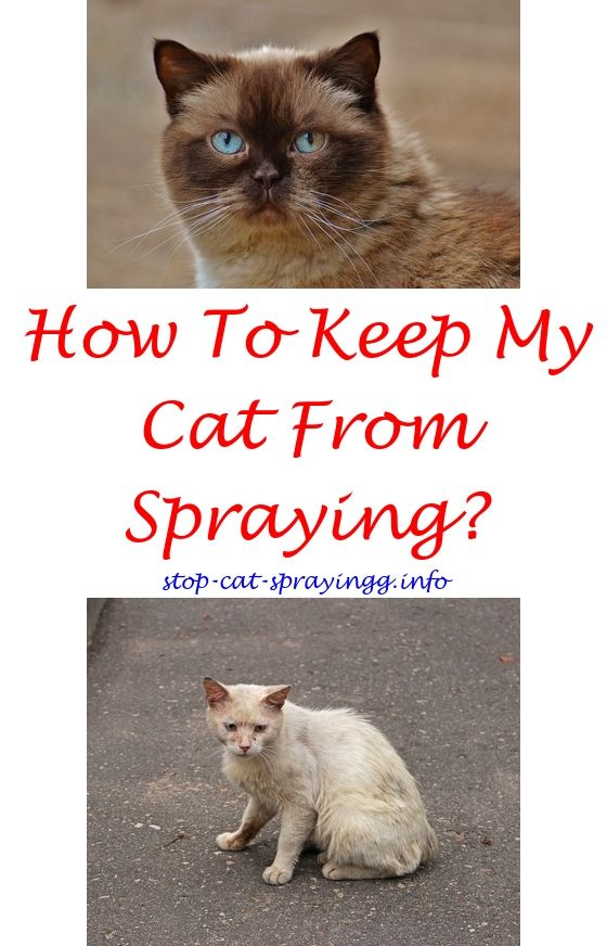 Cat Spray Smell Cat Spray Male Cat Spraying Cat Spray Smell