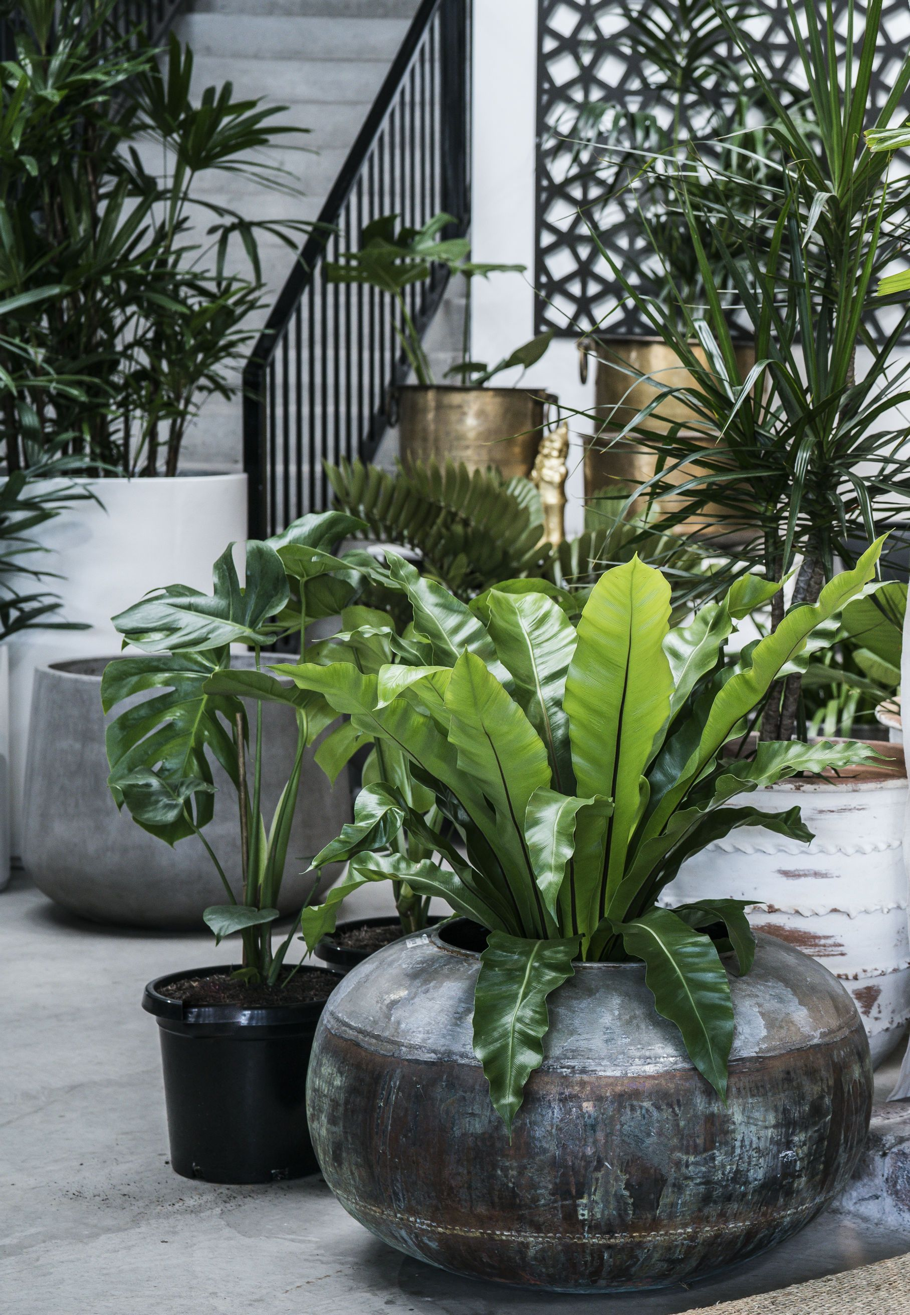 A selection of pots & plants in store ©garden Life
