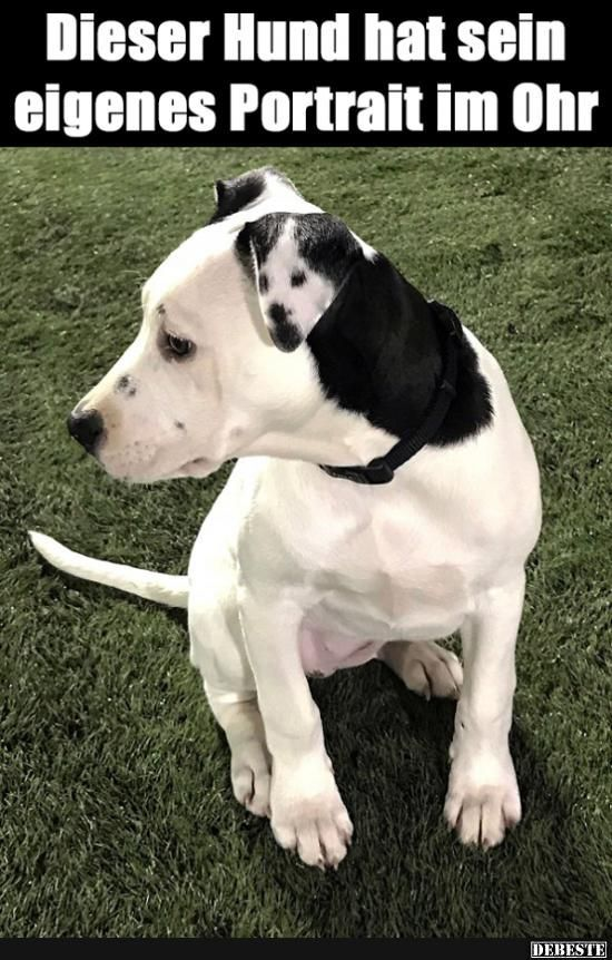 Photo of This dog has his own portrait in his ear ..