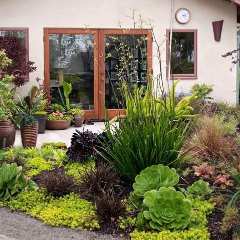 Small space garden in southern california filled with for Low water landscaping plants