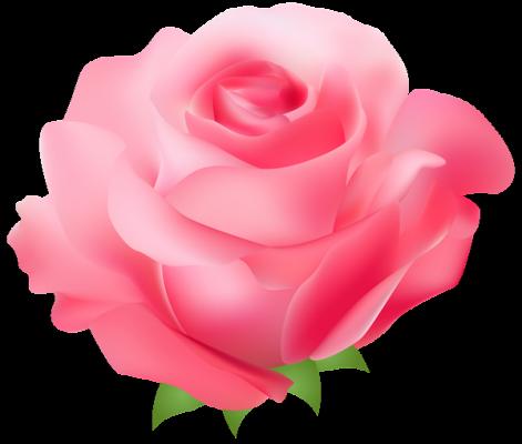 Clip Art Pink Rose Pink Rose Png