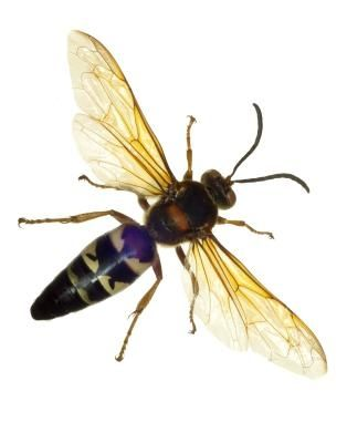 How To Get Rid Of Wasps Hunker Get Rid Of Wasps Wasp Wasp Insect