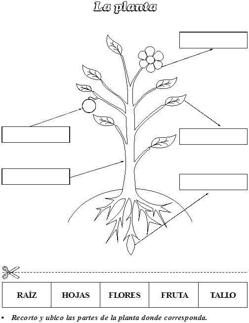 Maestras Jardineras Ciclos De Vida De Las Plantas Partes