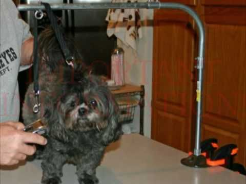 Dog grooming tables and straps for the do it yourself dog groomer dog grooming tables and straps for the do it yourself dog groomer youtube solutioingenieria Images