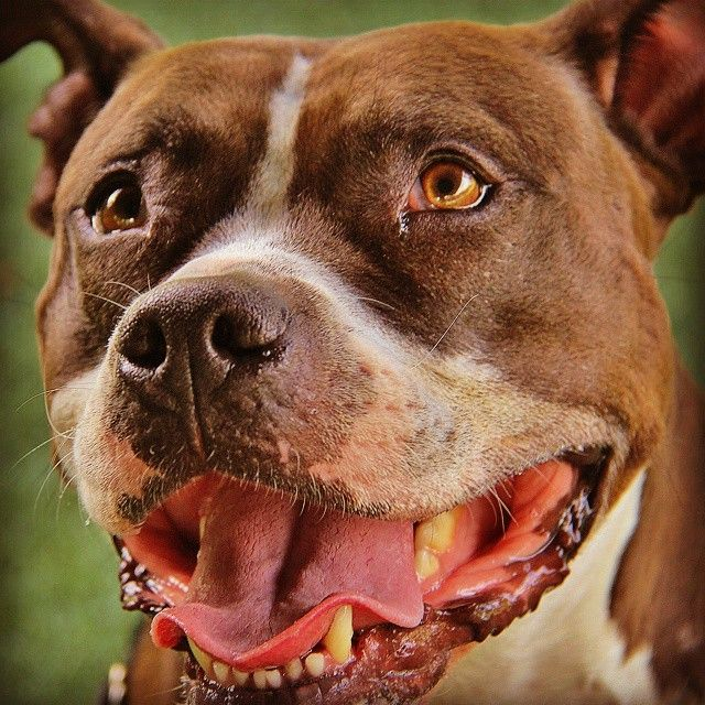 Paige available at Monmouth County SPCA. by Rusty Jhorn