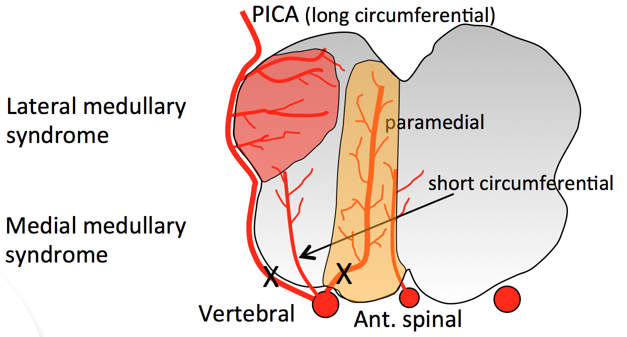 ANTERIOR SPINAL ARTERY SYNDROME PDF DOWNLOAD