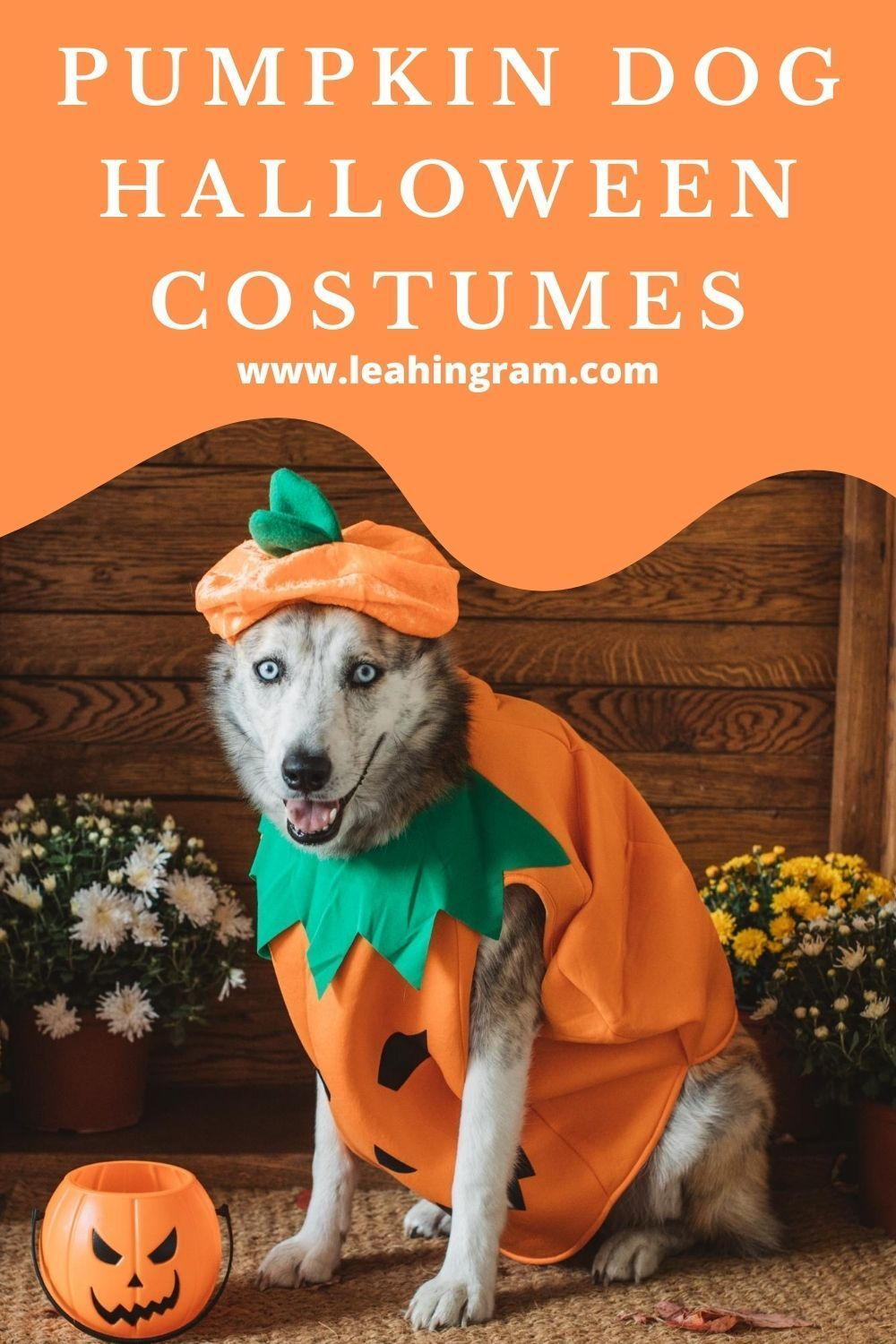 Halloween 2020 Dogs Awesome Dog Costumes for Halloween 2020   Leah Ingram in 2020