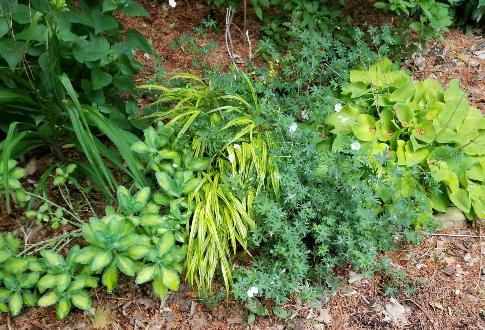 Pin by Priscilla S. on Your ZONE 5 Shade Border | Plants ...