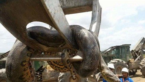 Some Brazilian Blokes Have Discovered A Fucking Massive Snake   TheLADbible -        100%   100%   http://20.theladbiblegroup.com/s3/content/353x199/f856e98057e971ef09c4703f1a593034.jpg                        TheLADbible    http...