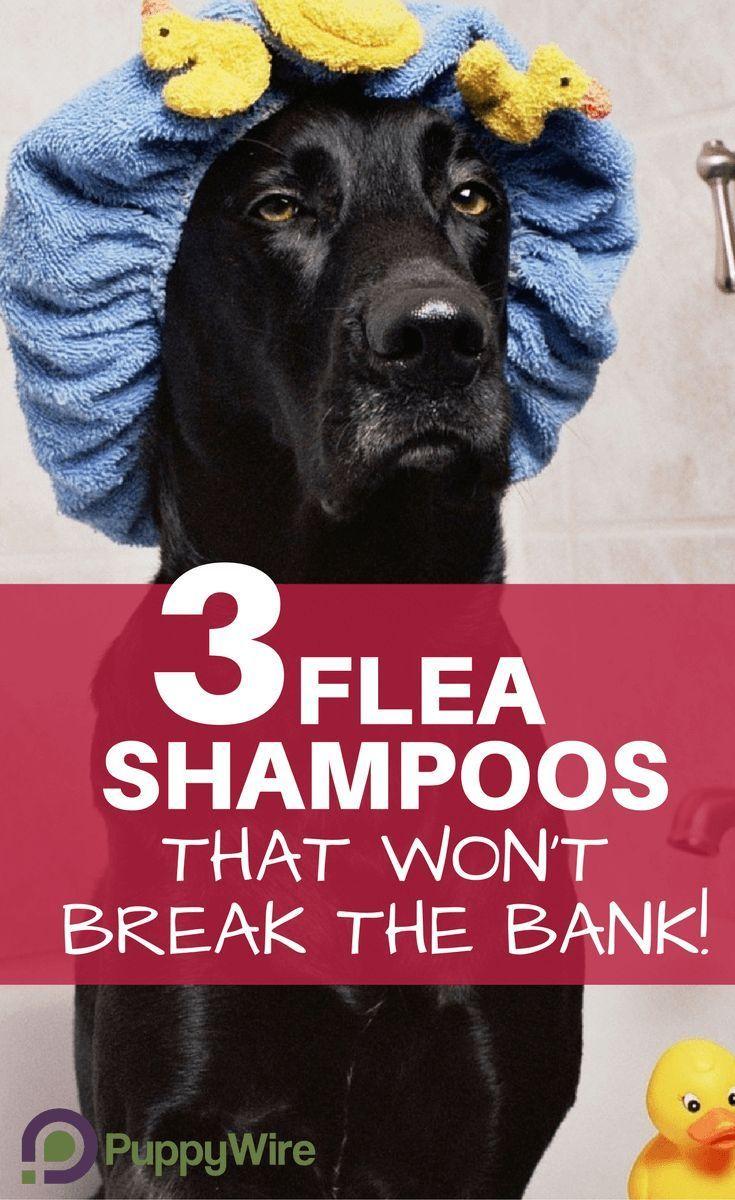 Best Dog Flea Shampoos 3 Picks That Won't Break the Bank