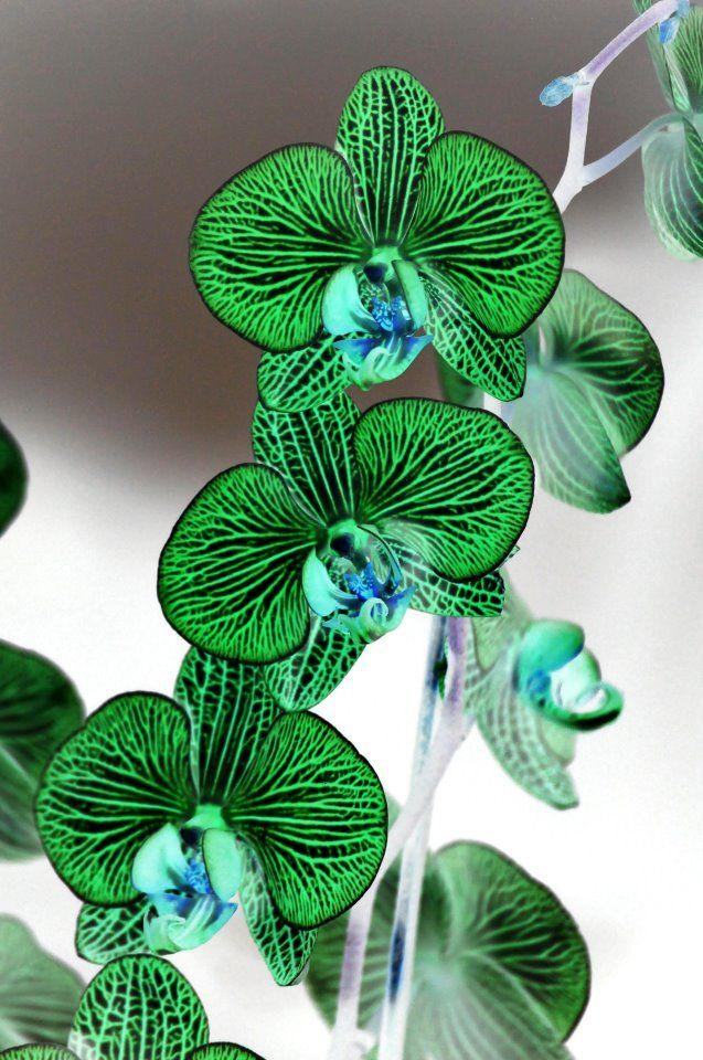 Jade Green Orchid Flores Inusuales Jardin De Flores Flores Increibles