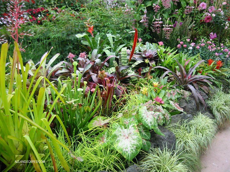 tropical garden ideas nz - Google Search