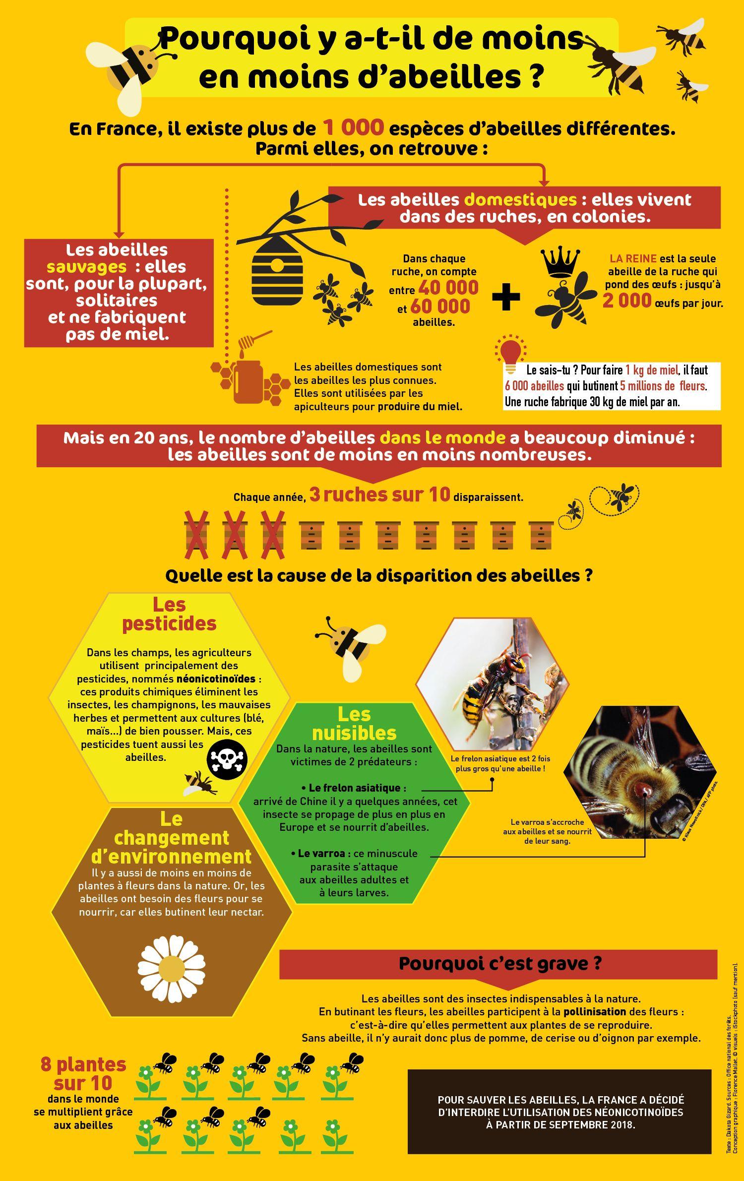 Les abeilles sont-elles menacées ?