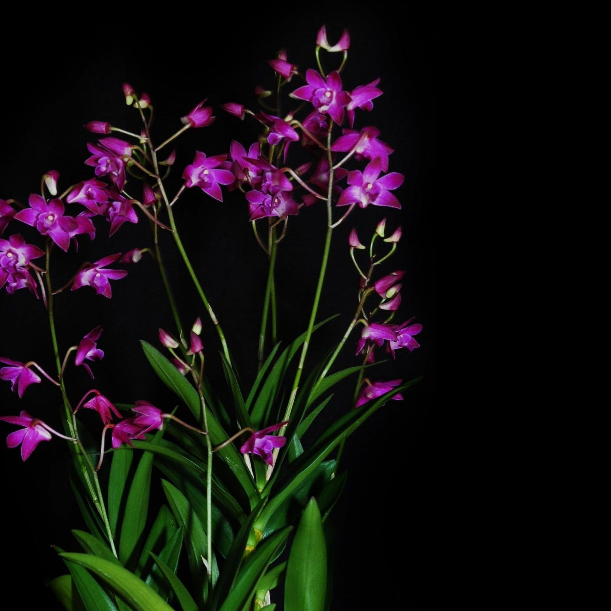 660d5e957656988b50cb1ef04da2eaac Luxe De Fleurs De Jardin Des Idées