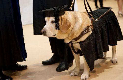 ツイッタラーの殆どが犬より低學歴になってしまった。 pic ...