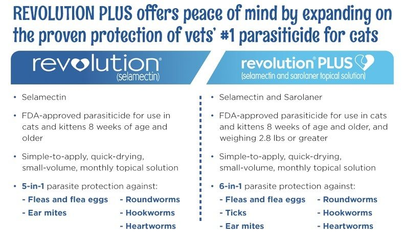 Introducing Revolution Plus For Cat Owners Animal Hospital Veterinary Services Cats
