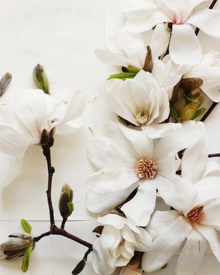 Kari Herer's Photography: Magnolias & Illustrations