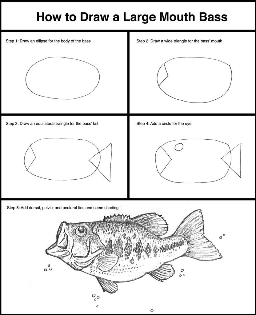 How to Draw a Large Mouth Bass | http://pinteresthumor.com | Humor ...