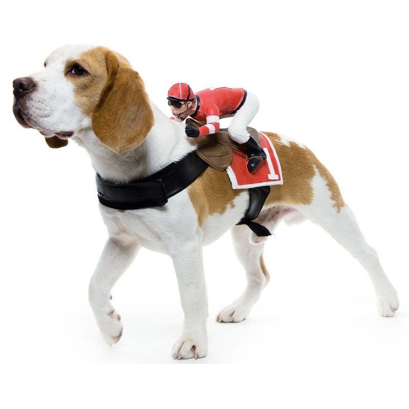 Jockey Dog Rider Pet Costume From Buycostumes Com Jockey Petcostume Dogcostume Halloween ペット 犬 ビーグル