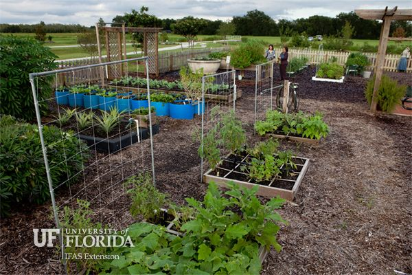 The Gardening Calendar Gives Florida Gardeners A Monthly Guide For What To Plant And Do In Their