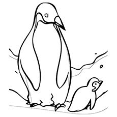 Penguin Coloring Pages Free Printable For Kids Penguin