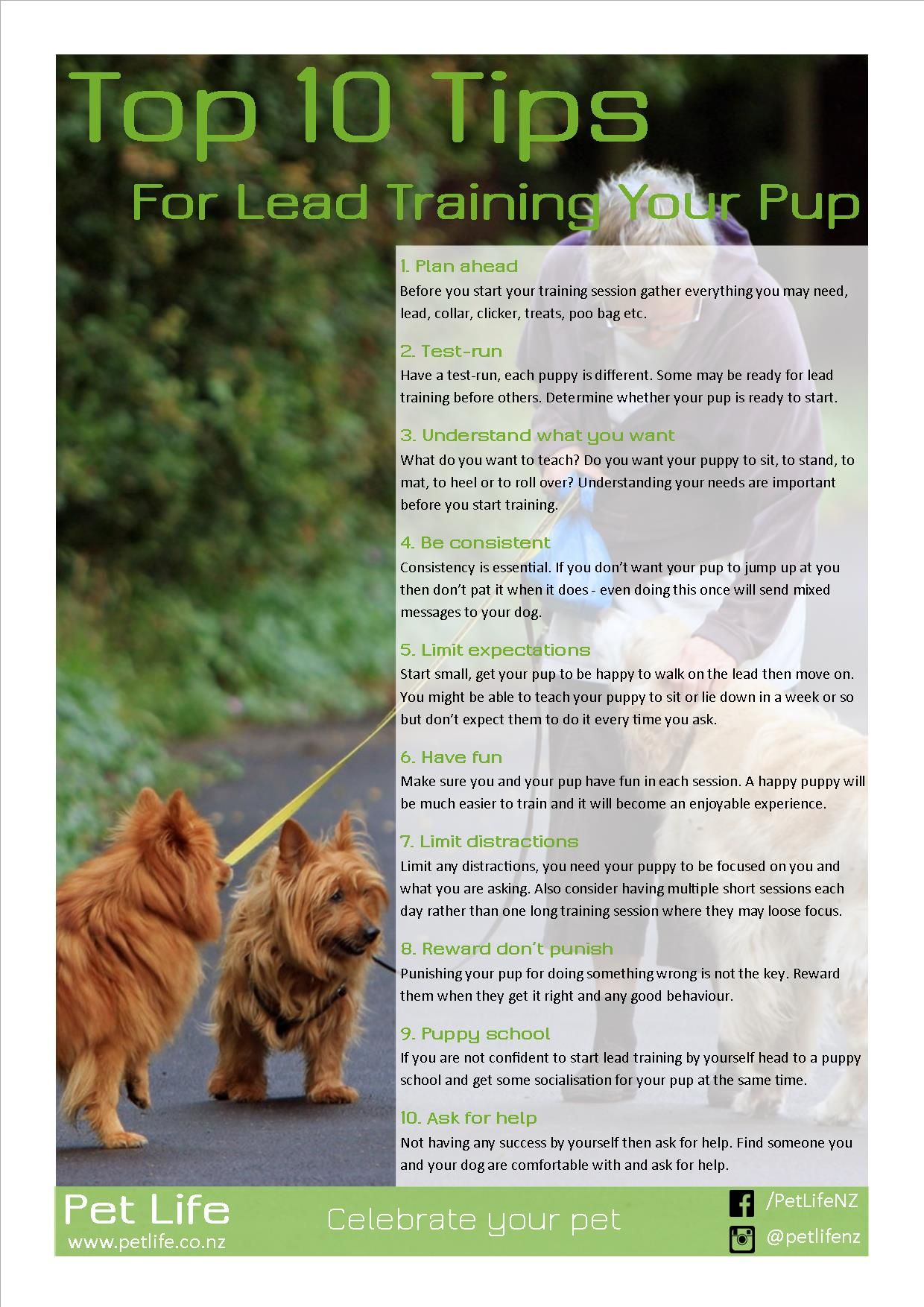Is Your Dog Lead Trained Its Never To Late To Tech Them Manners
