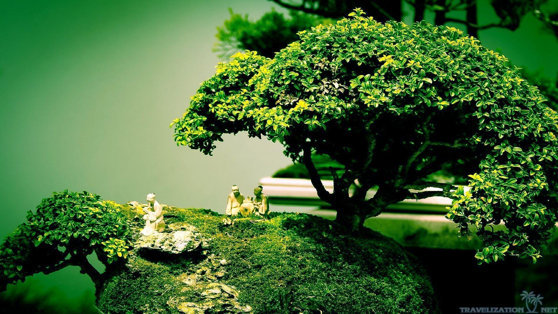 Bonsai Bonsai Tree Tree Wallpaper Bonsai