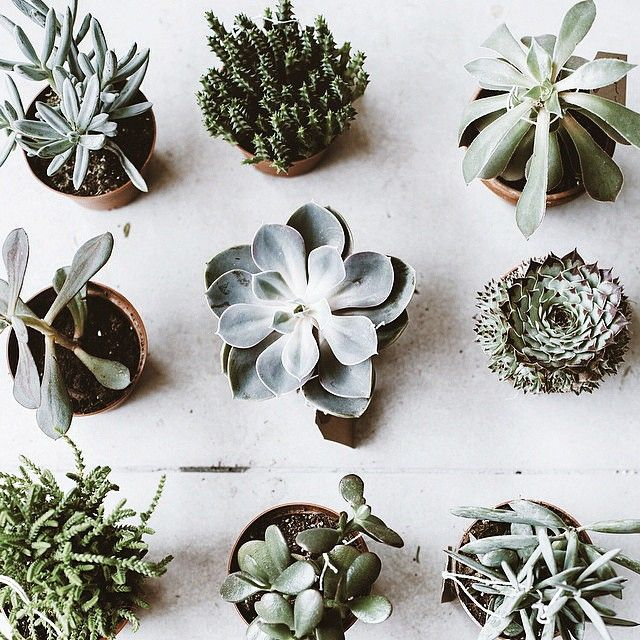Wonderful Variety Of Tiny Succulent Plants Buy Them Small And Don - Japan is going mad over these tiny succulents that look like bunny ears