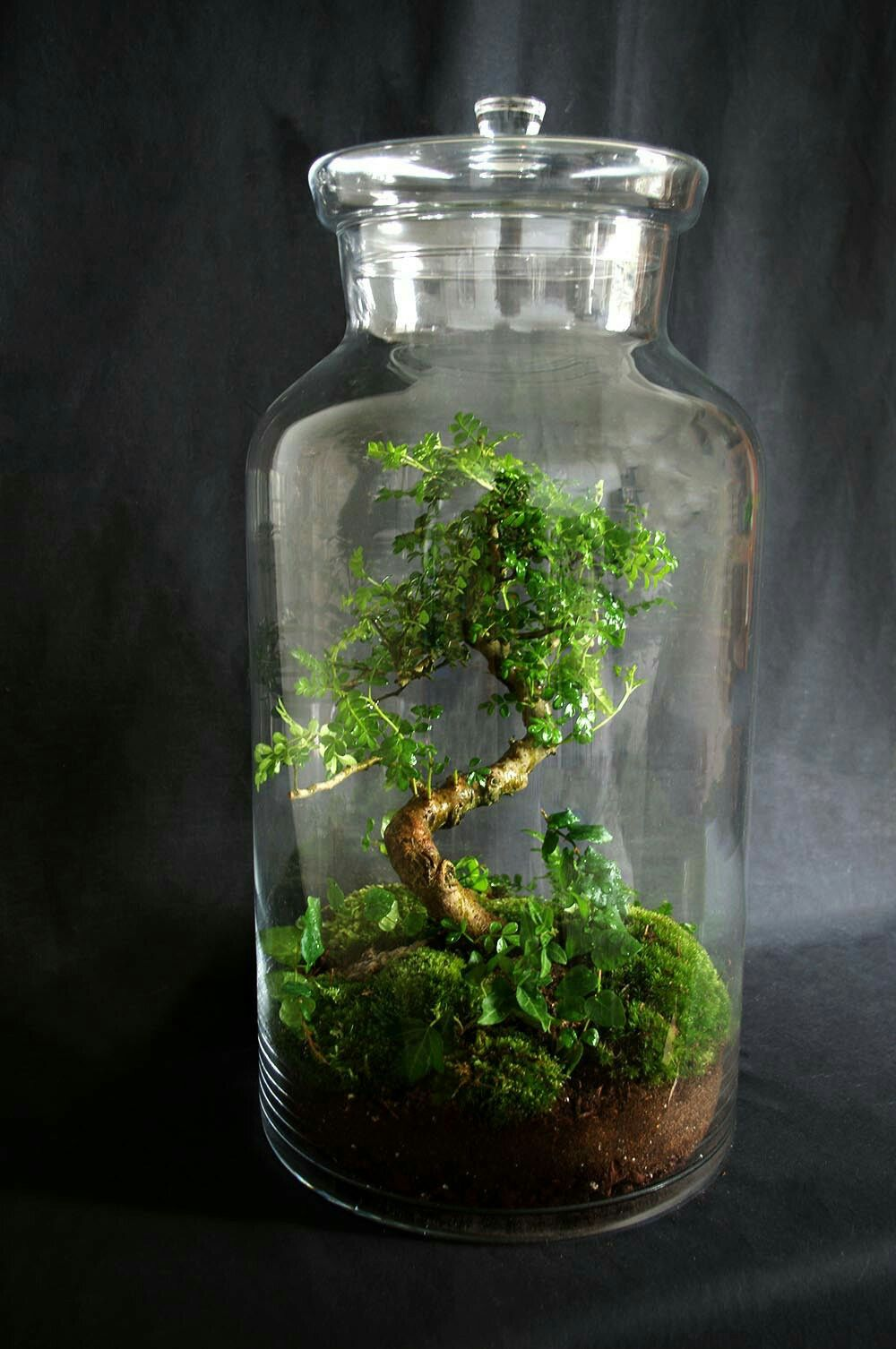 Pin by ian james wood on botanicals pinterest terraria bonsai