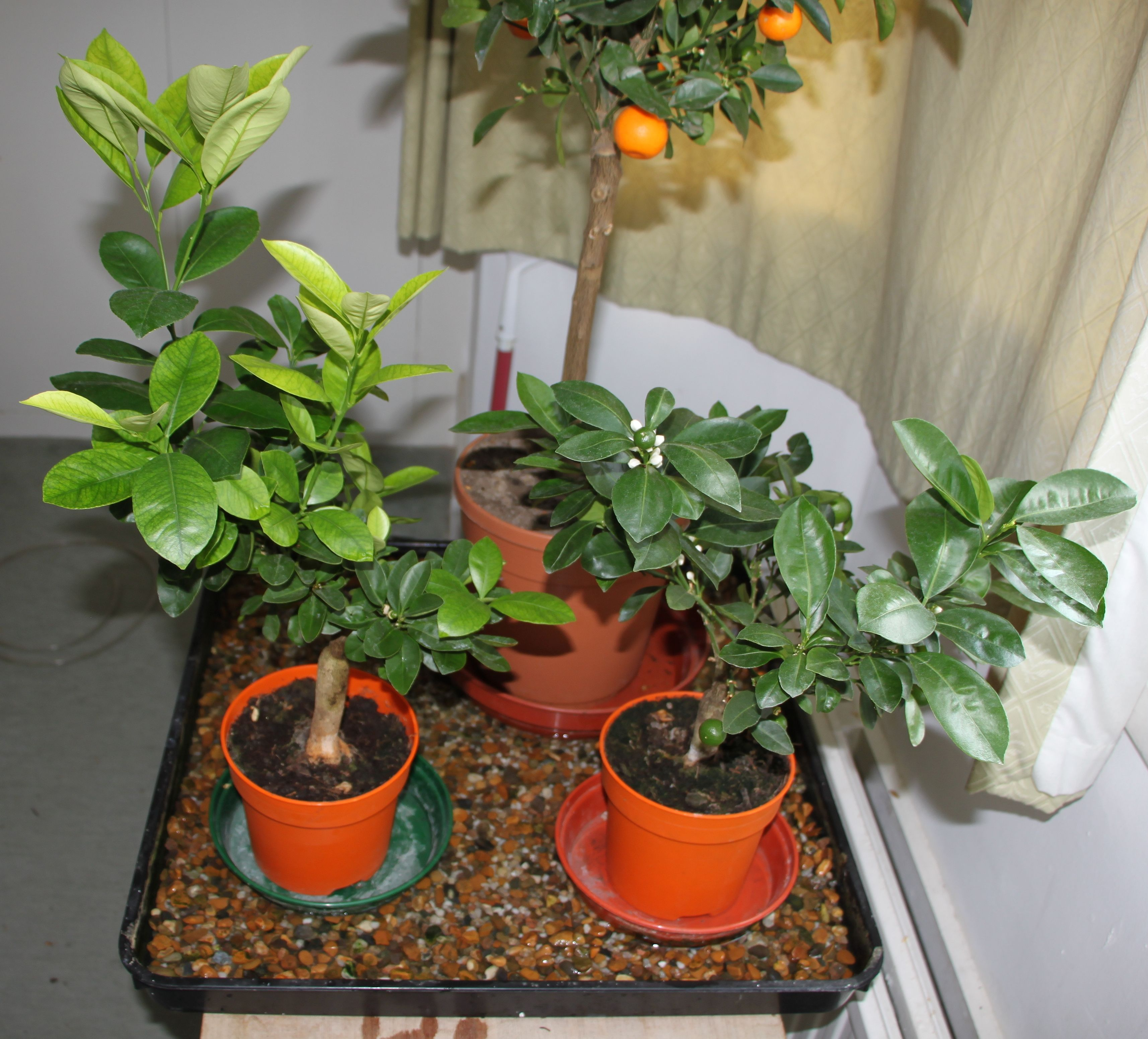 Plants On Pebble Tray For Humidity Indoor Garden Plant