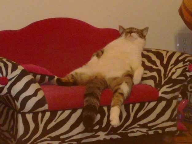 The Couch Potato | The 100 Most Important Cat Pictures Of All Time
