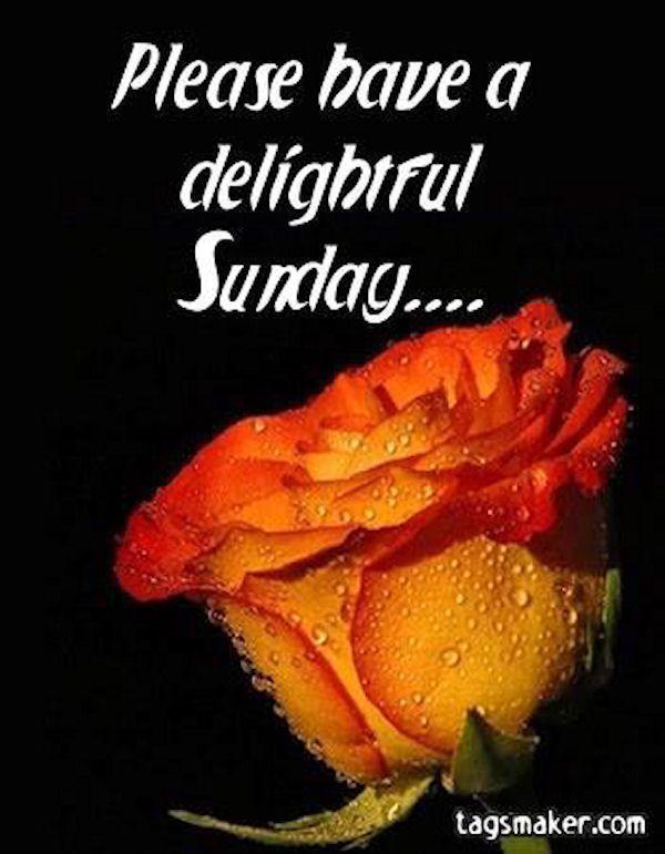 Please Have A Delightful Sunday good morning sunday sunday