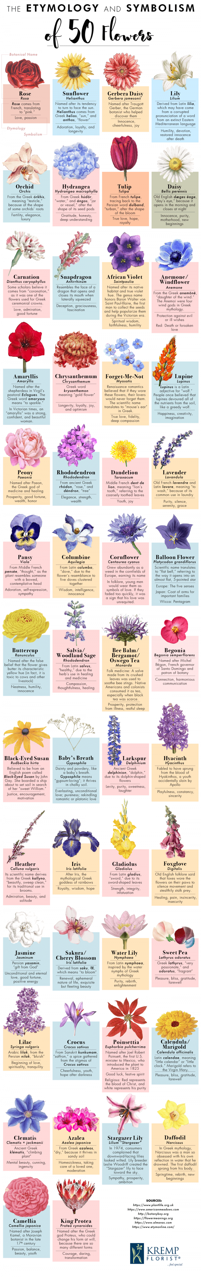 The True Meaning Behind 50 Flower Types Daily Infographicdaily Infographic In 2020 Flower Names Types Of Flowers Flower Meanings