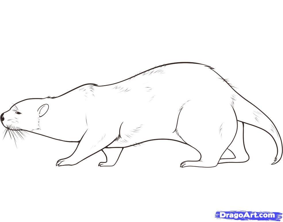 otter drawing - Google Search | Fluffy Stuff | Pinterest | Otters ...