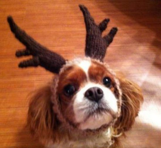 Crochet Dog Hat Pattern Ideas Best Collection Dog Antlers Free