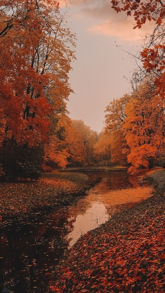 40+ Free Amazing Fall Wallpaper Backgrounds For iP