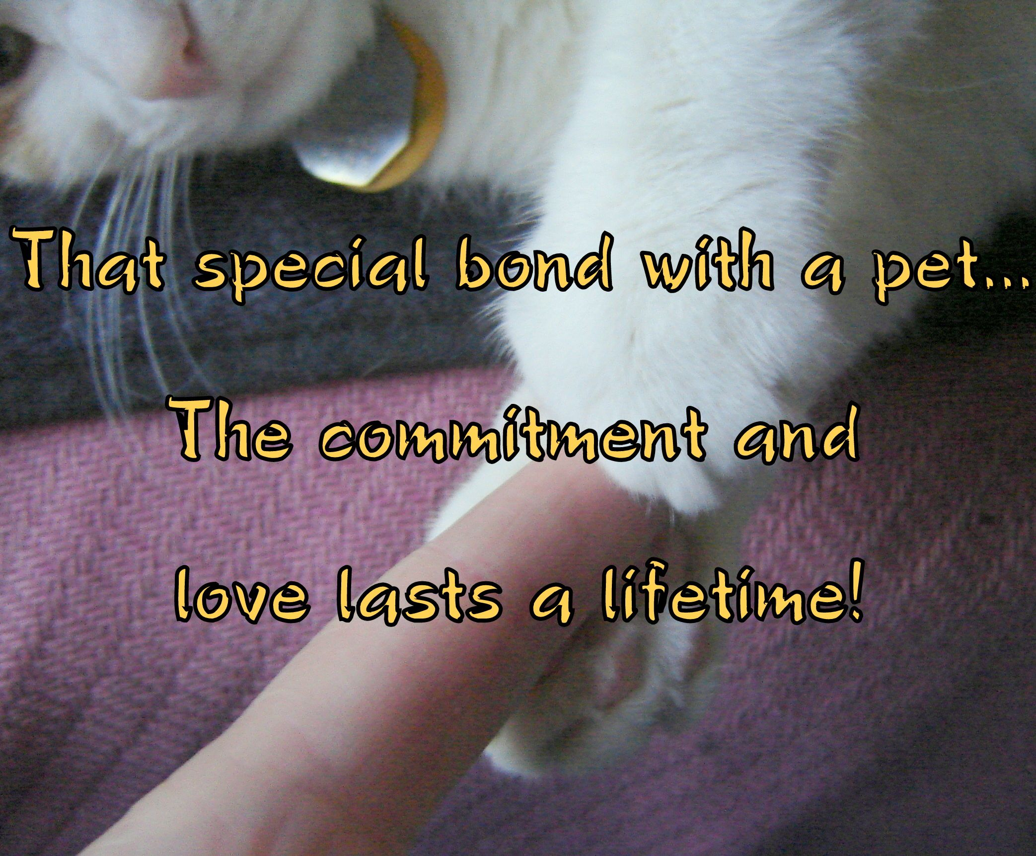 Special Bond with a Pet -commitment & love lasts a lifetime! -Made with photo of my furkid Bonney holding my finger in her paws :) -- furkid, feline cat, paws holding finger, hold on, committed, bonded, sweet, special, love lasts, kitty, furry love, friendship, companionship, caring, pet parent, cat mom, cat lover, meme.
