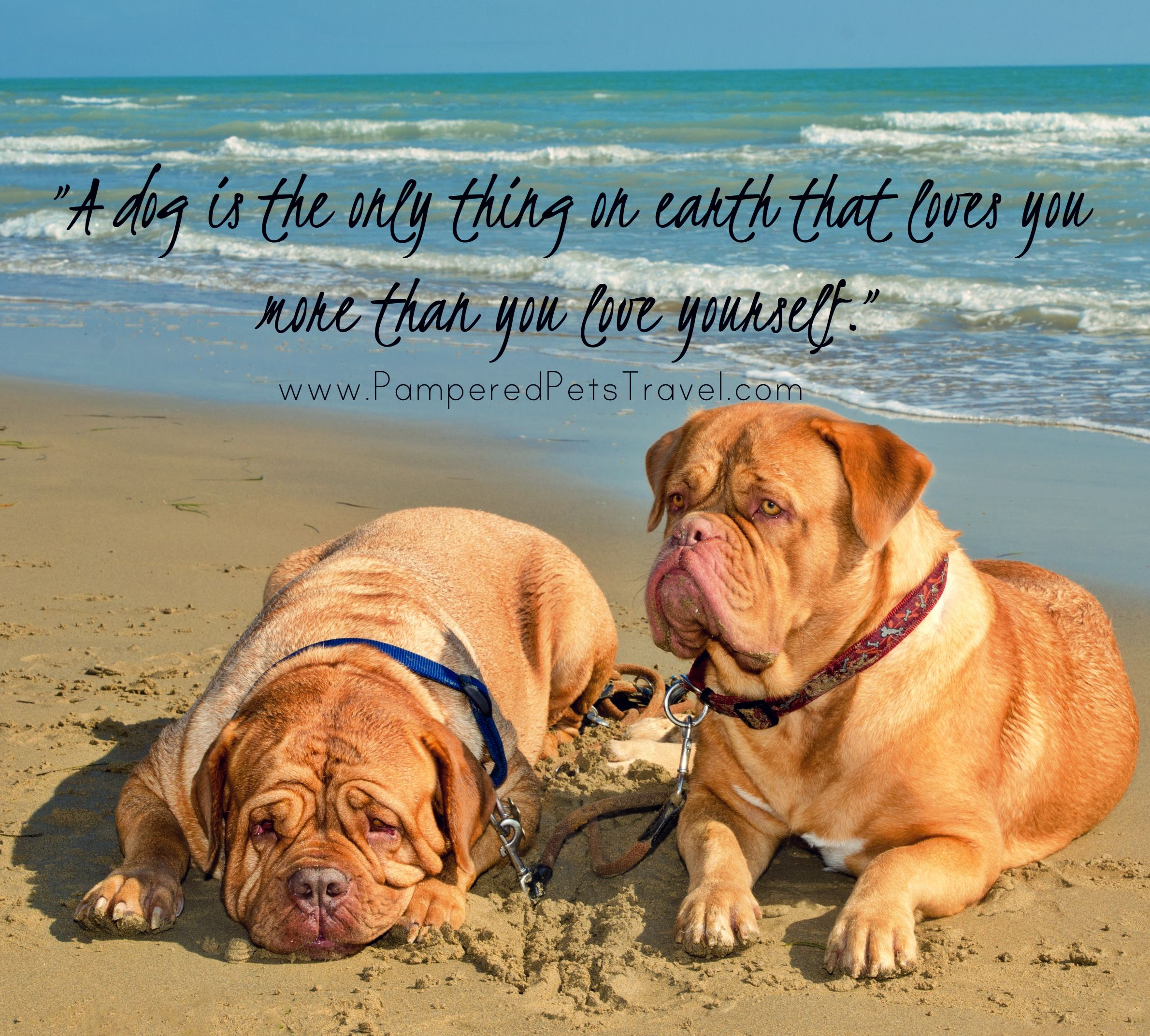 Www Pamperedpetstravel Com Dog Quotes Travel Trip Traveling Pettravel Dog Dogs Puppy Puppies Pet Pets Cute Fun Funny Dogs Dog Quotes Pet Travel