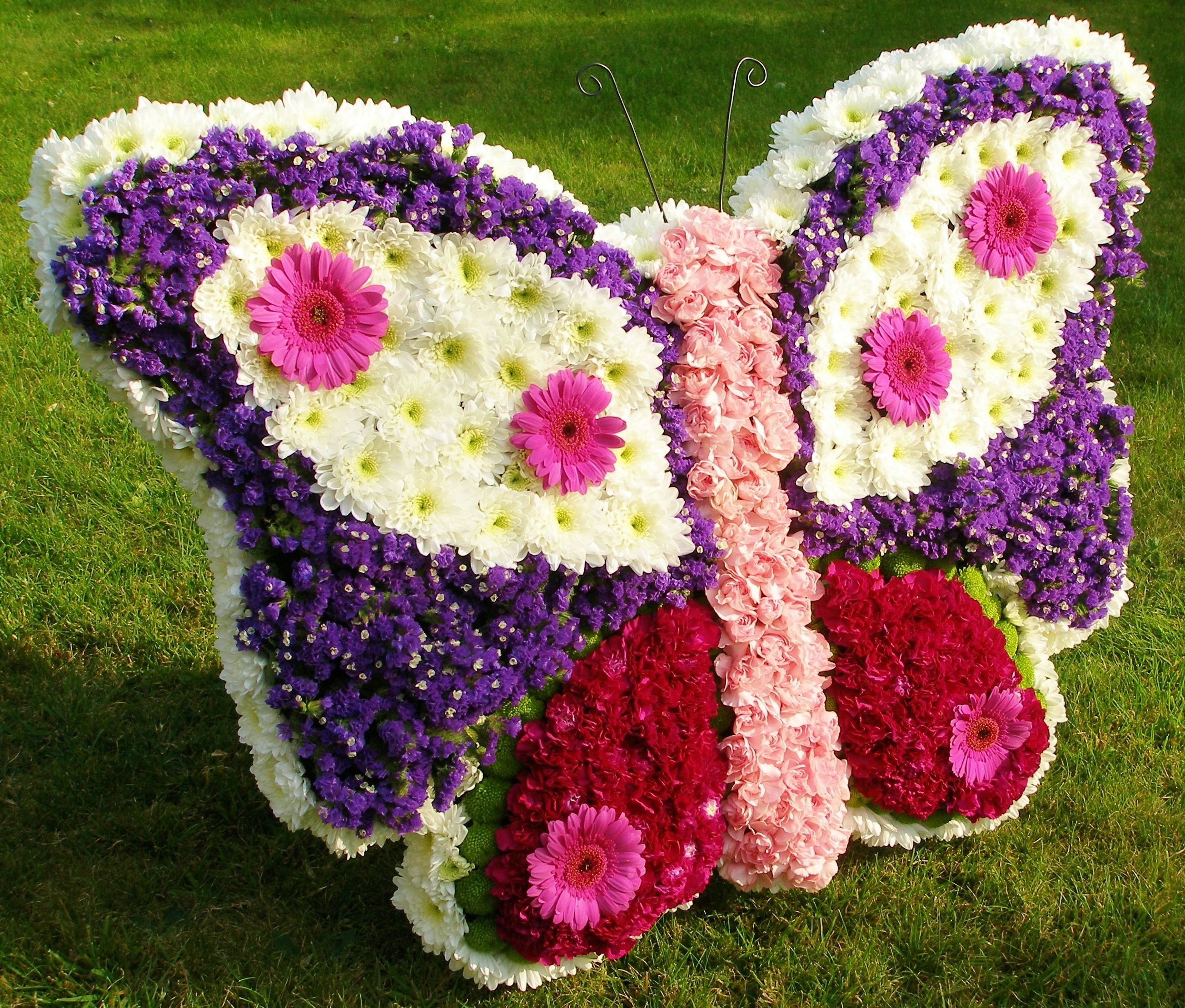 Best wild flowers butterfly funeral flowers wild flowers butterfly funeral flowers these flowers are very beautiful here we provide a collections of various pictures of beautiful flowers charming izmirmasajfo