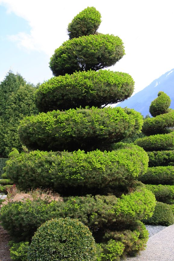53 Stunning Topiary Trees Gardens Plants And Other Shapes