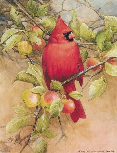 Cardinal in Apple Tree by Kathy Goff of Creative