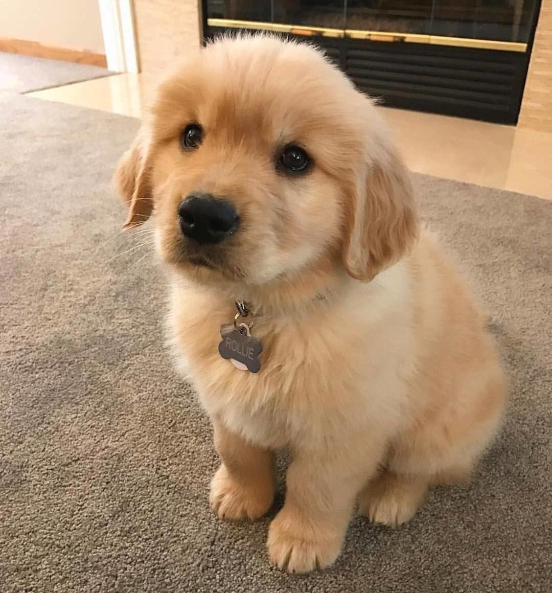 Comment Eduquer Son Chien En Seulement 15 Mins Par Jour Petohaku A Pour But De Vous Donner Tous Les Outils Pour Vous F Cute Puppies Cute Baby Animals Puppies