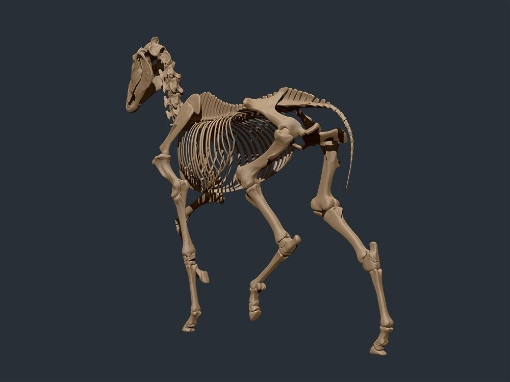 Pin by Big Nose on horses in 2019 | Horses, Horse anatomy