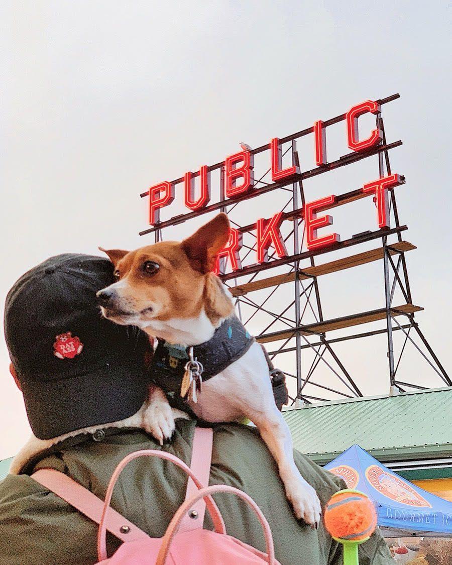 Weekly Pet Travel Photo Challenge 375 Pet Travel Seattle Dog