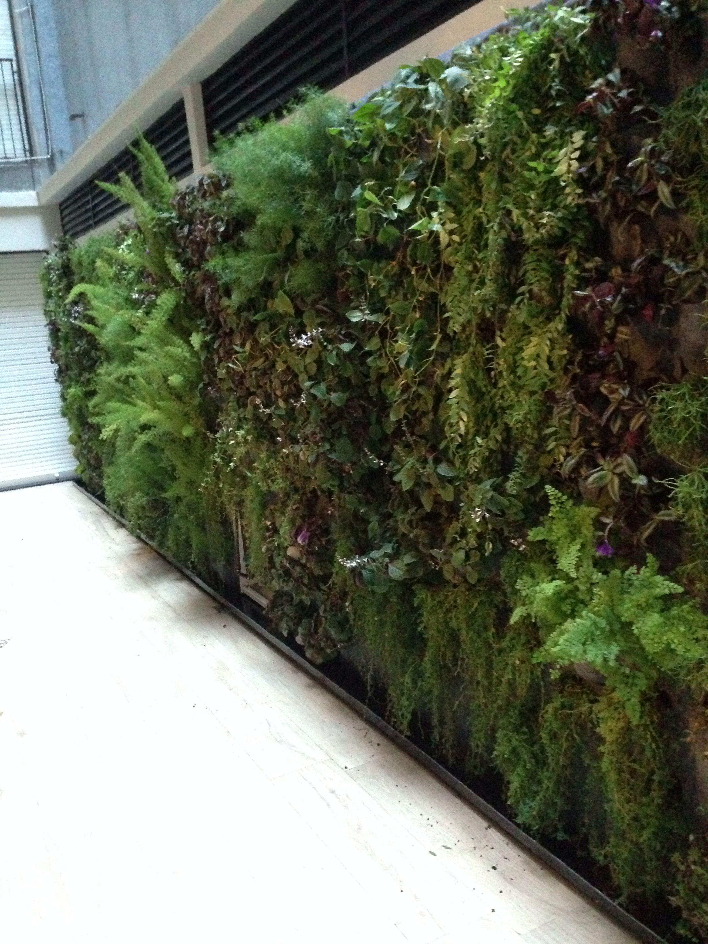 Jardin vertical en patio interno de 15m2 realizado por for Jardines verticales buenos aires