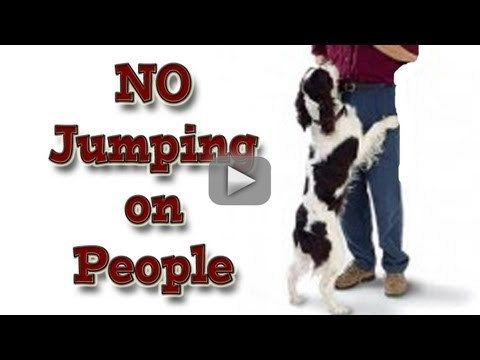 How To Teach Your Dog Not To Jump Up On People Clicker