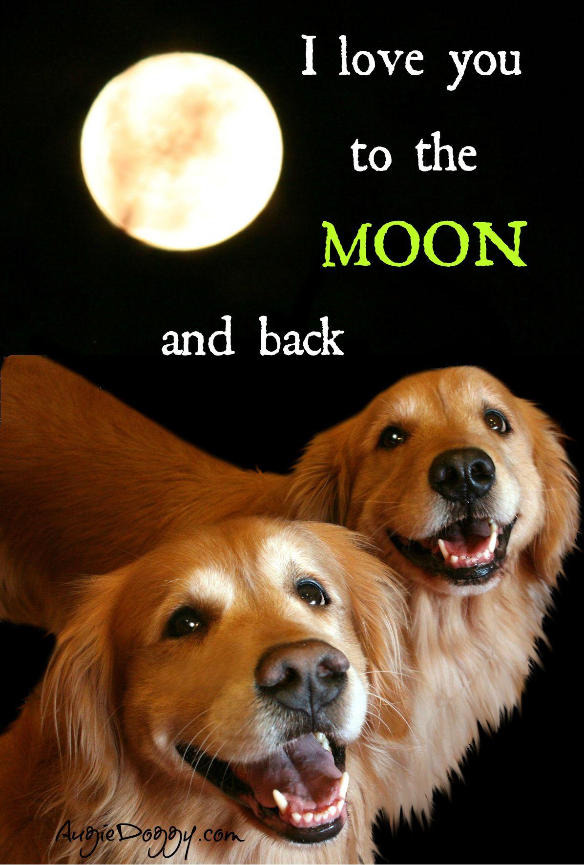 Http Www Augiedoggy Com Apps Blog Dogs Golden Retriever Dog